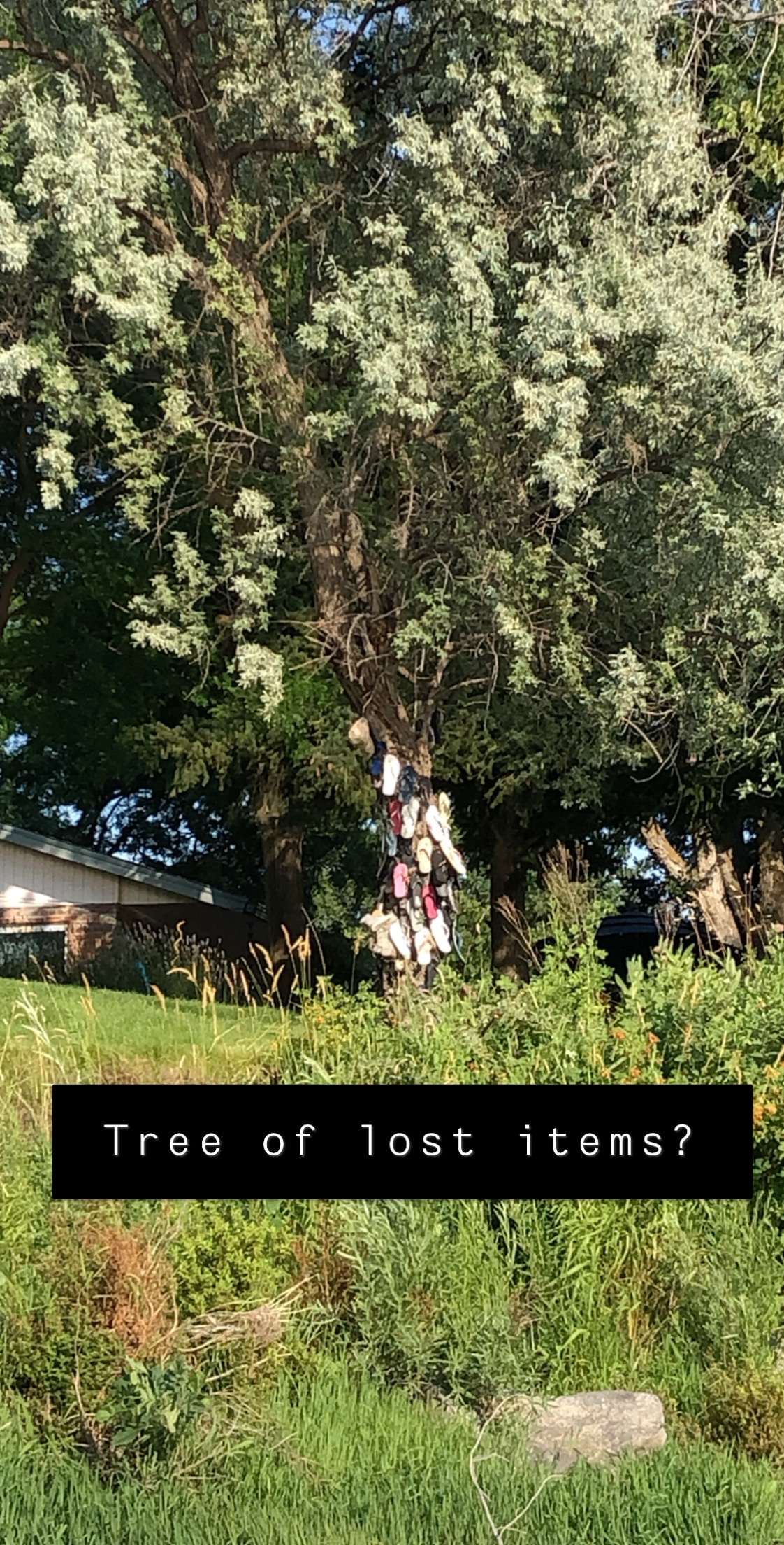 Snapchat image of a Tree Filled with Lost Items